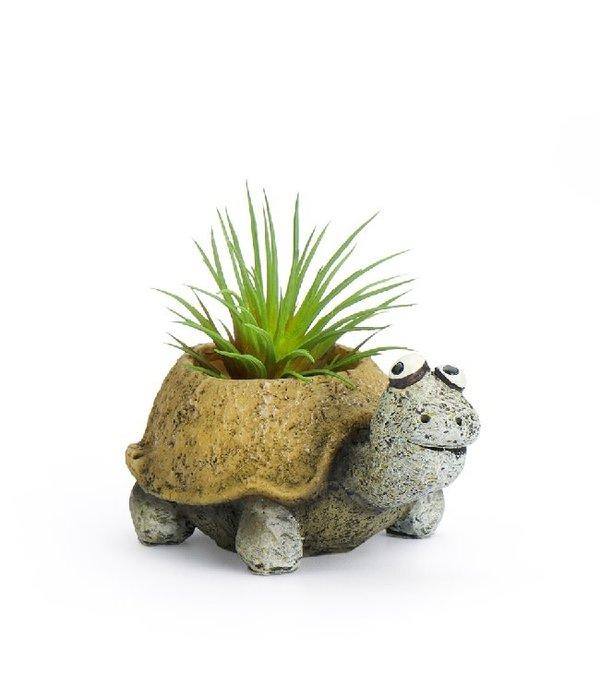 Preston The Baby Tortoise Planter