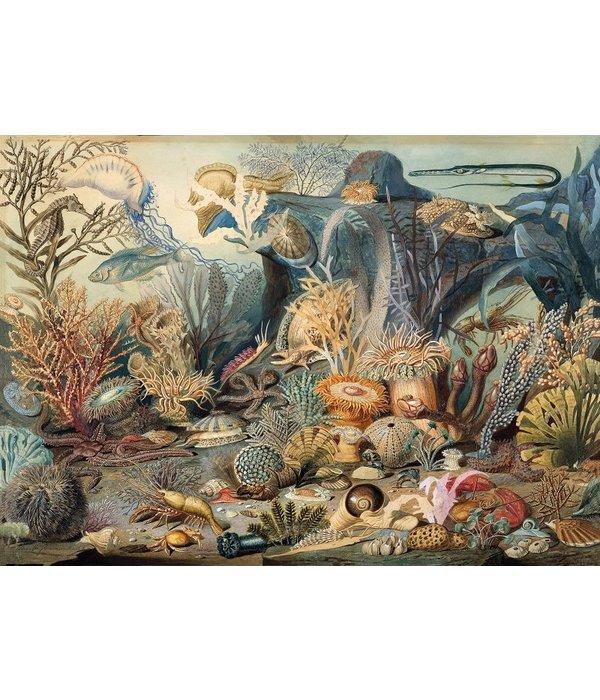 PUZZLE Ocean Life 1000 piece 9781441330598