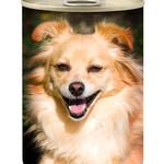 Can Dog Food