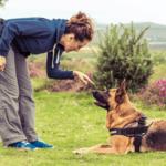 Training & Behaviour