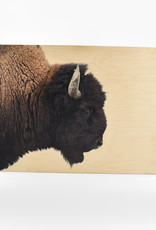 """American Bison on Maple Box - 24"""" x 18"""""""