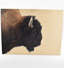 "American Bison on Maple Box - 24"" x 18"""