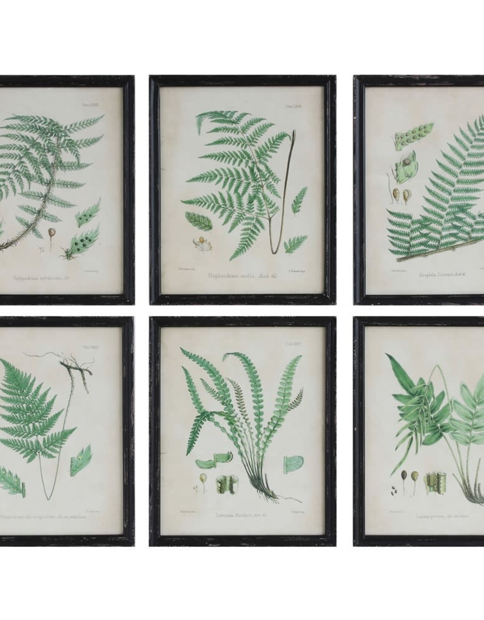 WALL DÉCOR WITH VINTAGE FERN ART AND WOOD FRAME