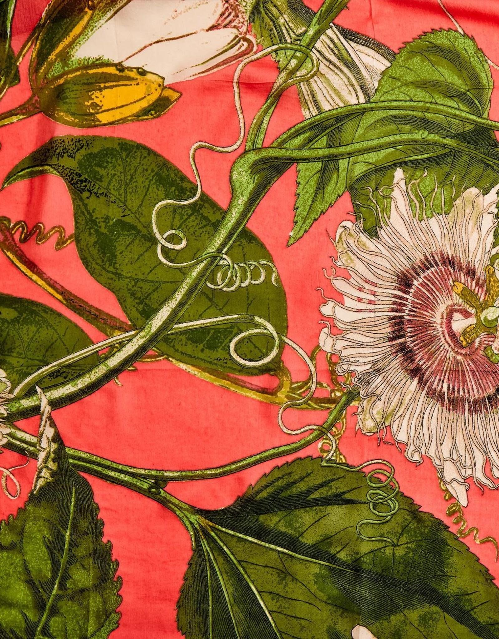 SCARF PASSIONFLOWER CORAL