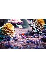 Lomography LomoChrome Purple XR 100-400 Color Negative 35mm