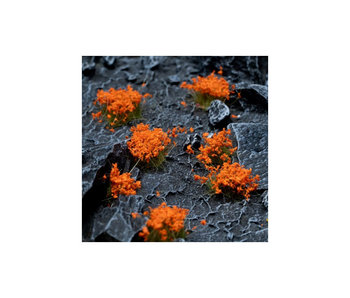 Orange Flowers - Wild