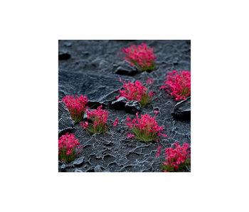 Pink Flowers - Wild