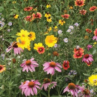 OSC Seeds Bee Pollinator Mixture