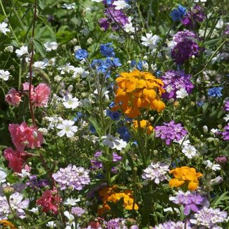 OSC Seeds Wildflower (Semi-shade Mix)