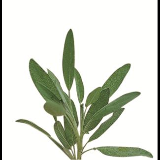 OSC Seeds Sage