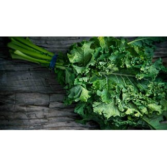 OSC Seeds Kale (Dwarf Curled Scotch)