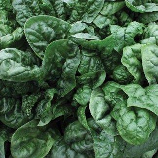 OSC Seeds Spinach (Avon)