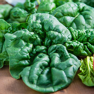 OSC Seeds Spinach (Bloomsdale)