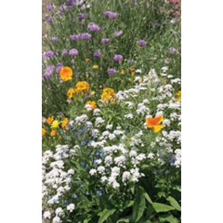 OSC Seeds Wildflower (Low Growing Mixture)