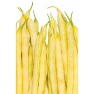 OSC Seeds Beans (Brittlewax)