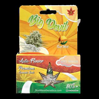 Sunwest Genetics Big Devil Autoflower (3 Pack)