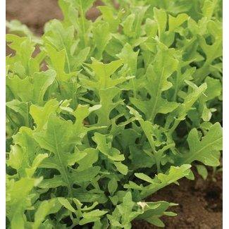 West Coast Seeds Arugula Astro Certified Organic