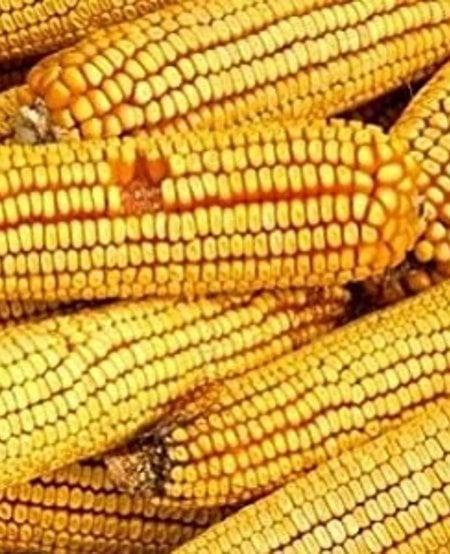 Ear Corn Bag