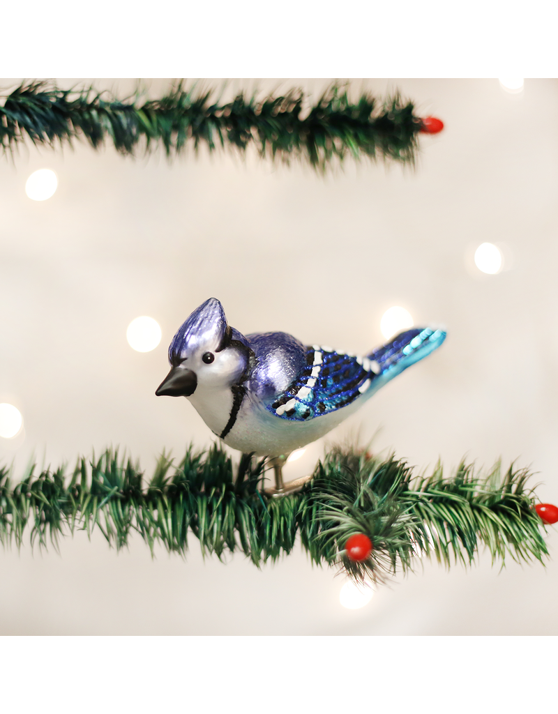 Bright Blue Jay