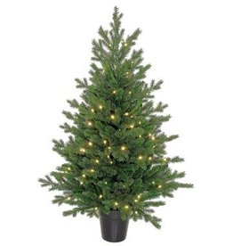 Nursery Pine Tree Potted