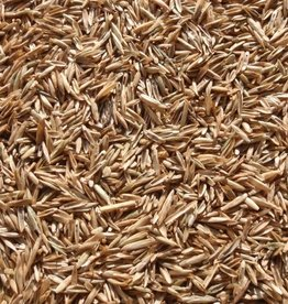 Annual Rye Grass Seed, 50 lb. Bag