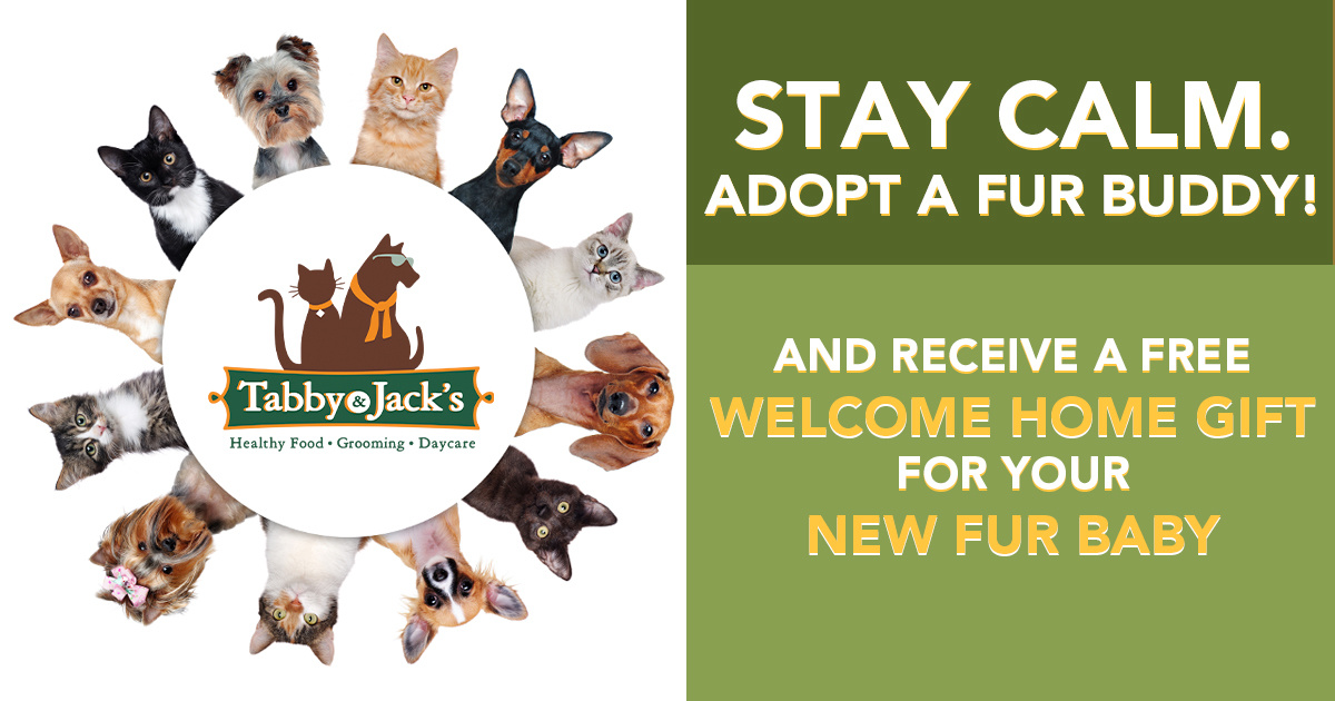 CLEAR THE SHELTERS MONTH | Free Gift Basket from Tabby & Jack's
