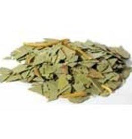Herb Eucalyptus