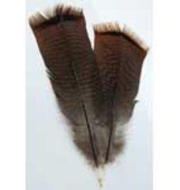 Feather Bronze Turkey AZ