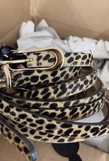 STREETS AHEAD AP - Cheetah Belt