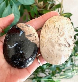 Petrified Palm Root Touchstones for grounding and anchoring
