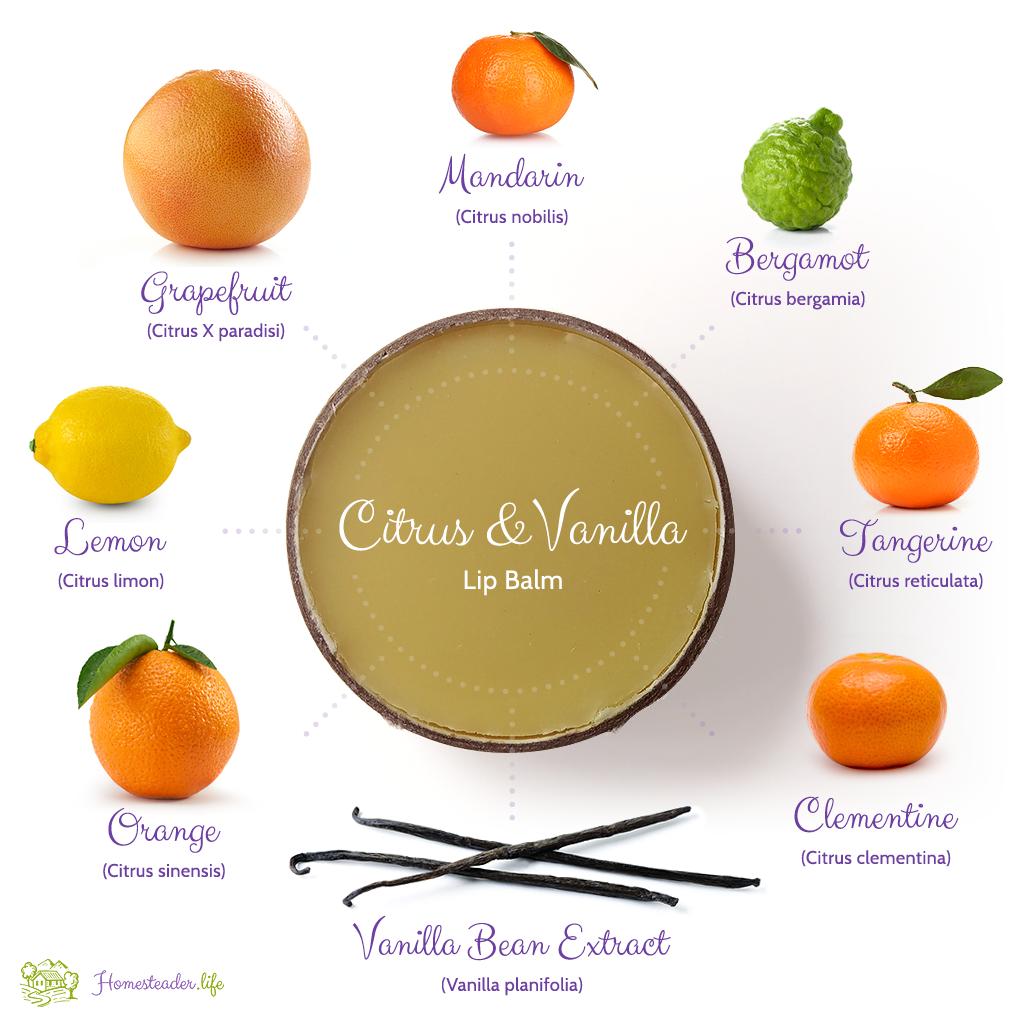 Homesteader.life Citrus and Vanilla Lip Balm
