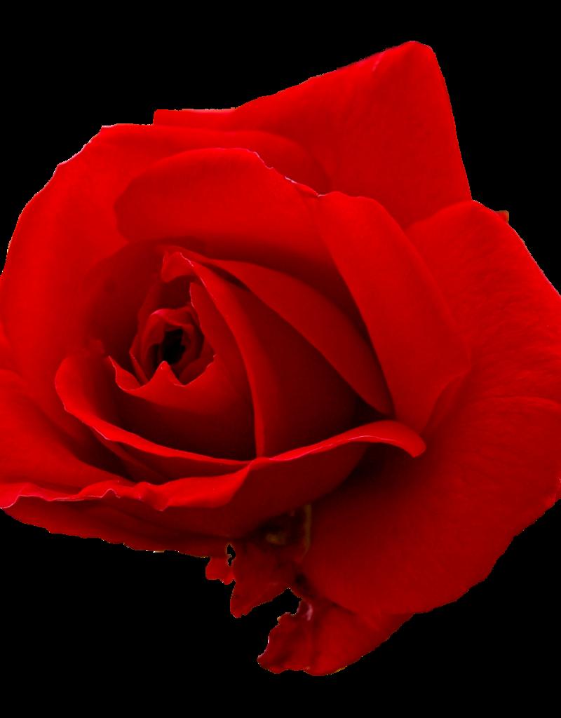 Vaporifics Red Rose