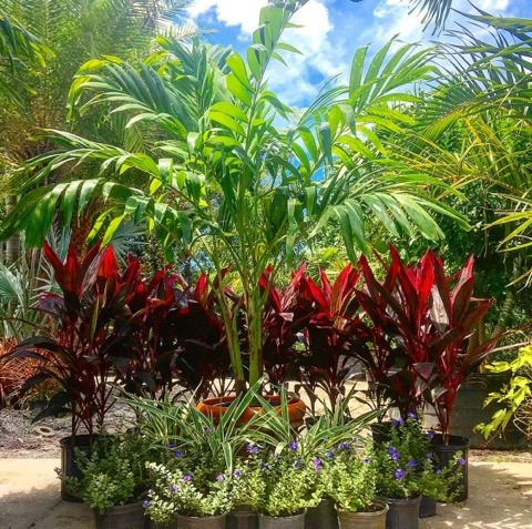 About Buy Plants Now Plant And Tree Nursery Your Complete Online