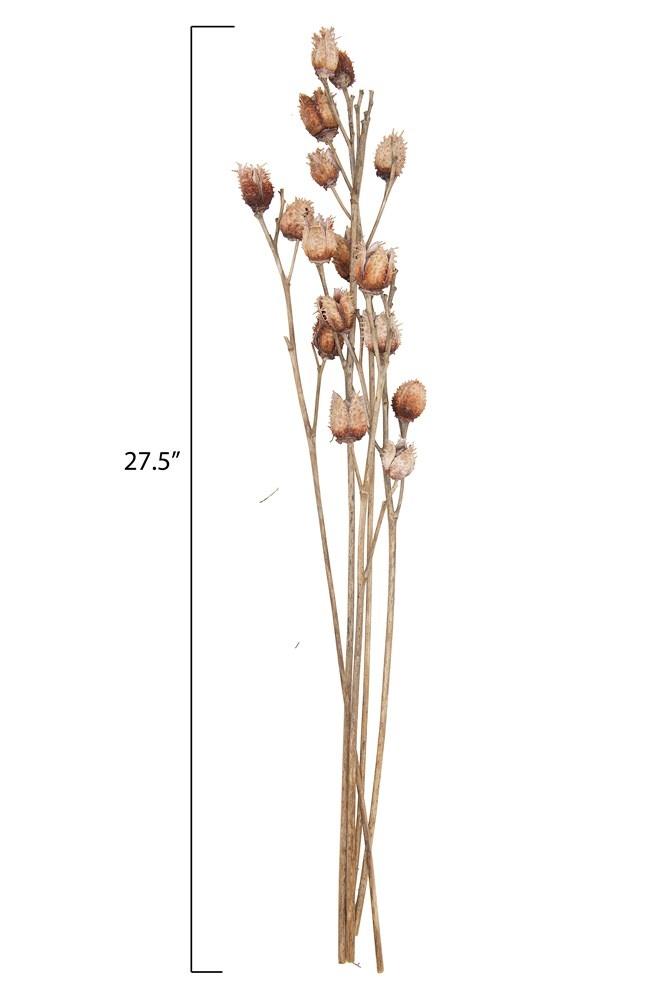 Dried Platycarya Bunch