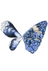 "Marissa Amor Marissa Amor ""Mussel Butterfly"" art print"
