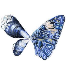 Marissa Amor Mussel Butterfly