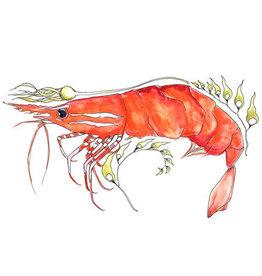 """Marissa Amor Marissa Amor """"Spot Shrimp in Kelp"""" art print"""
