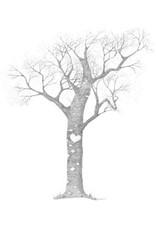 Katie Sevigny A Day in Ak Heart Tree | Katie Sevigny