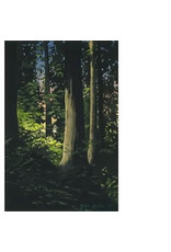 "Byron Birdsall Byron Birdsall ""Forest Light"" AP unsigned"