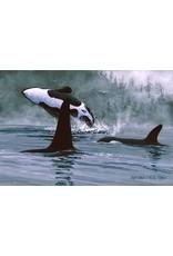 """Jon Van Zyle Jon Van Zyle """"Orcas"""" art print"""
