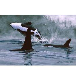Jon Van Zyle Orcas