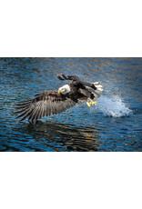 """Frank Lynn Pierce Frank Lynn Pierce """"Bald Eagle II"""""""
