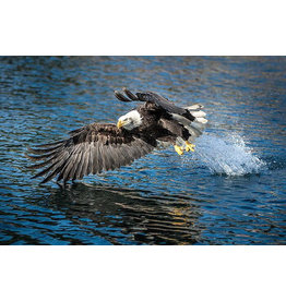 "Frank Lynn Pierce ""Bald Eagle II"""