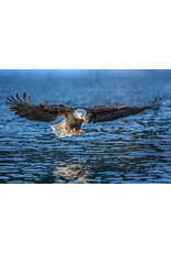 """Frank Lynn Pierce Frank Lynn Pierce """"Bald Eagle III"""""""