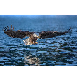 "Frank Lynn Pierce ""Bald Eagle III"""