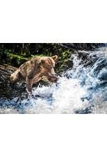 Frank Lynn Pierce Bear Fishing I   Frank Lynn Pierce