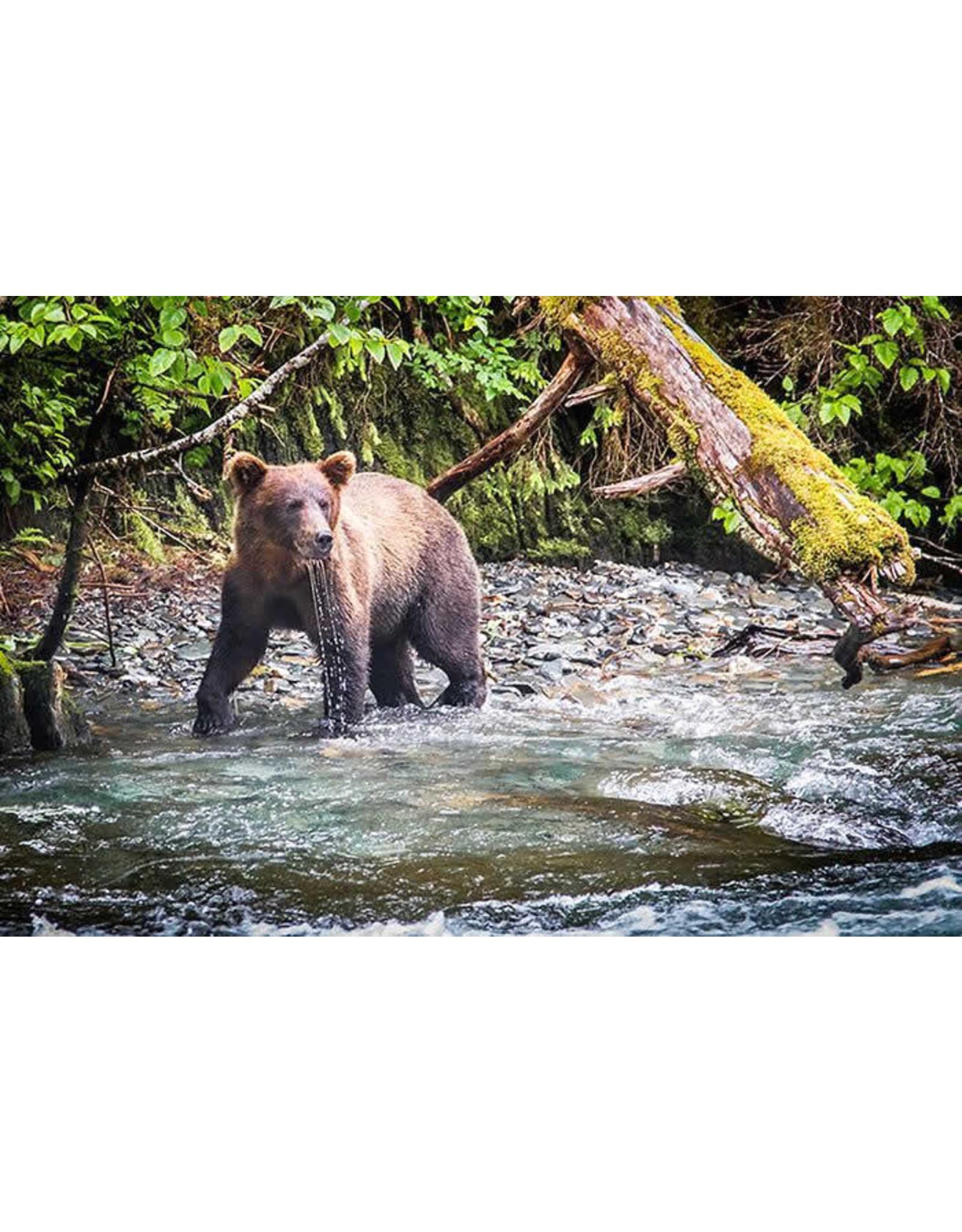 """Frank Lynn Pierce Frank Lynn Pierce """"Bear Fishing II"""""""