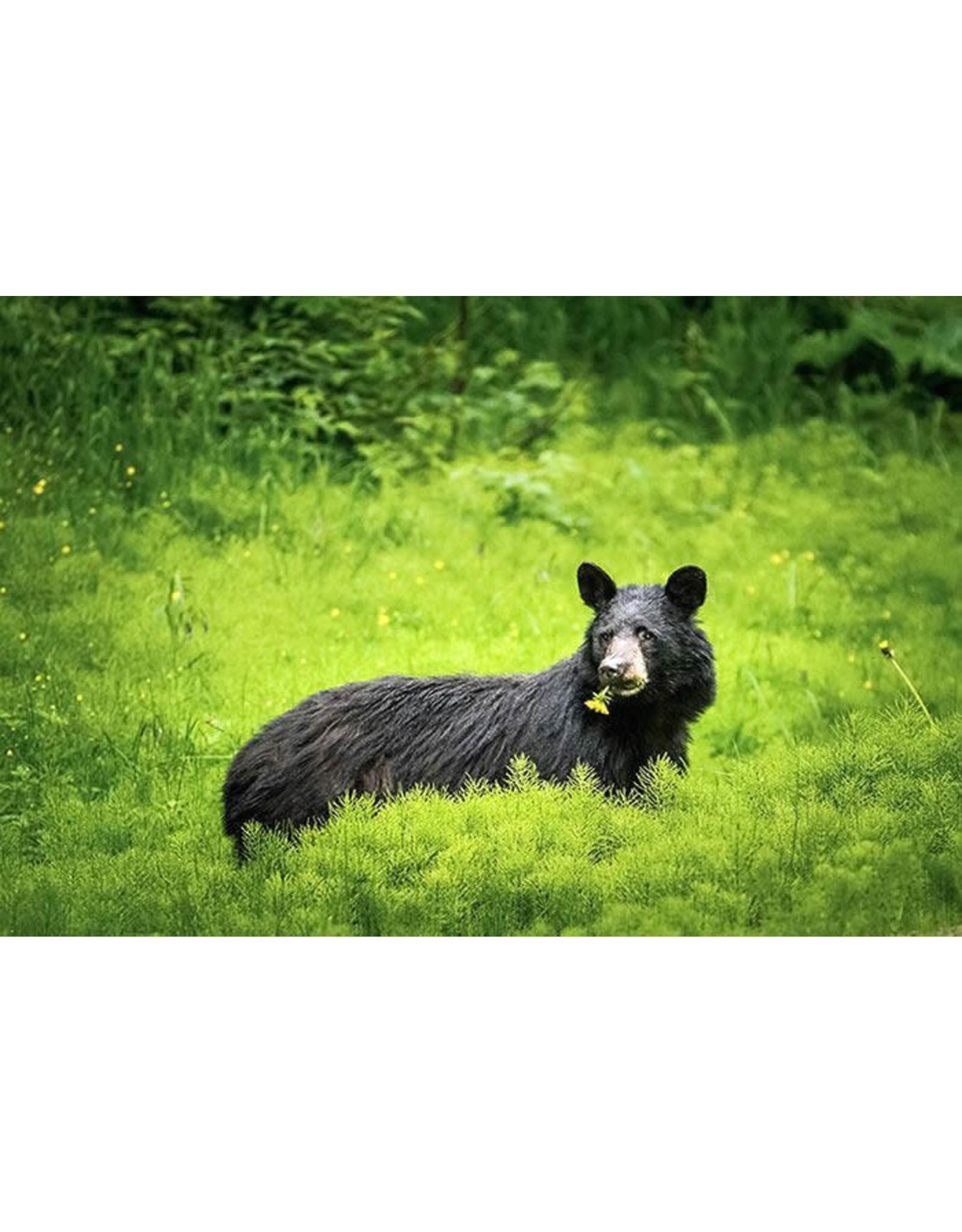 """Frank Lynn Pierce Frank Lynn Pierce """"Bear in Field"""""""