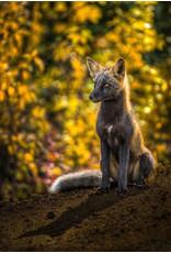 """Frank Lynn Pierce Frank Lynn Pierce """"Fox and His Shadow"""""""