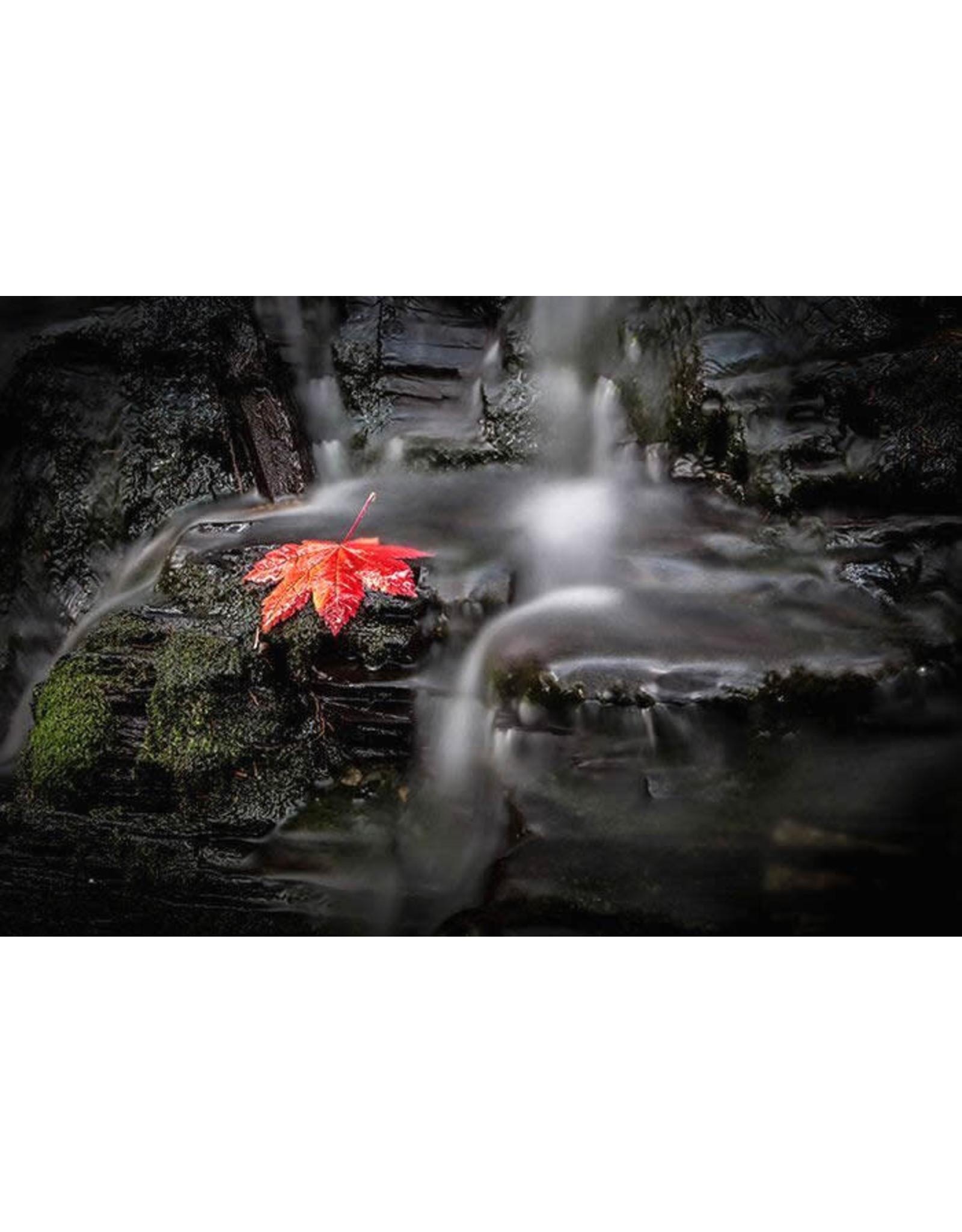 Frank Lynn Pierce Red Leaf | Frank Lynn Pierce